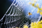 Spider on Dew-Covered Web Photographic Print by Craig Tuttle