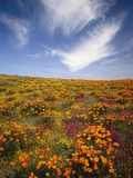 Field of Blooming Flowers Photographic Print by Craig Tuttle