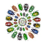Flower Beetles in Circular Pattern Design Photographic Print by Darrell Gulin