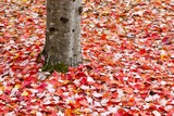 Pile of Autumn Leaves around Tree Trunk Photographic Print by Craig Tuttle