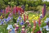 Schreiner Iris Gardens in Salem, Oregon Photographic Print by Craig Tuttle