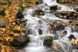Water Running over Rocks in Wahkeena Creek Photographic Print by Craig Tuttle