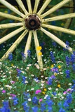 Wagon Wheel Sitting Among Wildflowers Photographic Print by Darrell Gulin