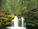 Waterfall Hiding in Lush Forest Photographic Print by Craig Tuttle