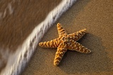 Starfish on the Sandy Beachs of Keihi, Maui Hawaii in the Evening Light Photographic Print by Darrell Gulin