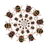 Beetle Circular Design with Small Round Beetles in the Chrysomelidae Family Photographic Print by Darrell Gulin