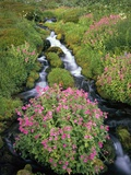 Blooming Wildflowers Surrounding Creek Photographic Print by Craig Tuttle
