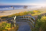 Morning Light Adds Beauty to Wildflowers and Fog Covered Rock Formations at Bandon State Park Photographic Print by Craig Tuttle
