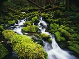 Moss Blanketing Rocks in Olympic National Park Photographic Print by Craig Tuttle