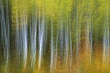 Aspen Grove Lining Mcclure Pass Photographic Print by Darrell Gulin