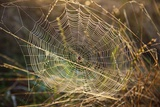 Dew on Spider Web on Mt. Hood Photographic Print by Craig Tuttle