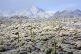 Winter in the Sonoran Desert Photographic Print by James Randklev
