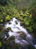 Brook Running over Mossy Rocks Photographic Print by Craig Tuttle