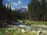 Mountain Stream Cascading over Rocks Photographic Print by James Randklev