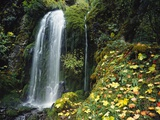 Lush Waterfall in Autumn Photographic Print by Craig Tuttle