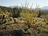 The Sonoran Desert at Sunrise Photographic Print by James Randklev