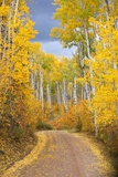 Dirt Road Lined with Colorful Aspen Trees in Autumn Reproduction photographique par Ron Dahlquist