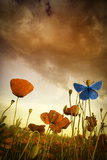 Poppies Dream Photographic Print by Marco Carmassi