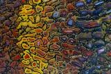 Colorful Petrified Dino Bone Photographic Print by Darrell Gulin