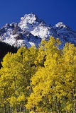 Aspen Grove and Maroon Bells Photographic Print by Darrell Gulin