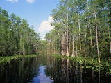 Okefenokee Swamp Photographic Print by James Randklev