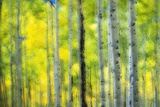 Aspen Grove in Autumn Photographic Print by Darrell Gulin