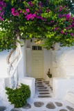 Storefront with Colorful Bougainvillea Photographic Print by Darrell Gulin