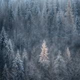 Primeras nieves Lámina fotográfica por Ursula Abresch