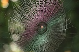 Dew on Spider Web, Oregon Photographic Print by Craig Tuttle