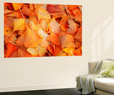 Ginkgo Fall Wall Mural by Philippe Sainte-Laudy