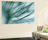 Pine Needles in Rain Wall Mural by Ursula Abresch