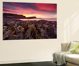 Morning Glory at Curio Bay Wall Mural by Yan Zhang