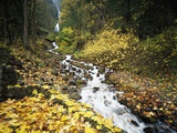 Autumn Leaves Next to Wahkeena Falls Photographic Print by Craig Tuttle