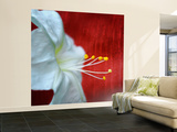 Flowers for Zoe Wall Mural – Large by Philippe Sainte-Laudy