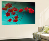 Delicate Red Wall Mural by Art Wolfe