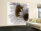 White Softness Wall Mural – Large by Philippe Sainte-Laudy