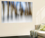 Winter Birches Wall Mural by Ursula Abresch