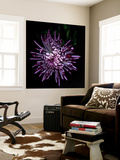Spider Chrysanthemum 2 Wall Mural by Magda Indigo