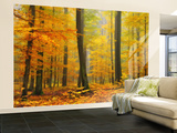 Orton Forest Wall Mural – Large by Philippe Sainte-Laudy