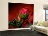 Red on Red Wall Mural – Large by Philippe Sainte-Laudy