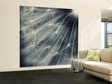 Search for Light Wall Mural – Large by Ursula Abresch