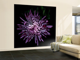 Spider Chrysanthemum 2 Wall Mural – Large by Magda Indigo