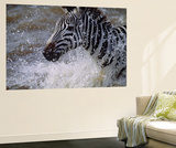 Splash Wall Mural by Art Wolfe