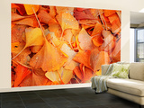 Ginkgo d'automne Reproduction murale XXL par Philippe Sainte-Laudy
