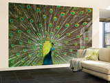 The Peacock Wall Mural – Large by Art Wolfe