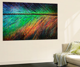 Featherlight Wall Mural by Ursula Abresch