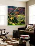 Autumn Erupting Wall Mural by Philippe Sainte-Laudy