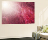 Pink Beads Wall Mural by Philippe Sainte-Laudy