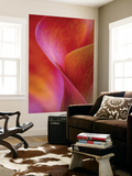 Calla Lily Curves I Wall Mural by Doug Chinnery
