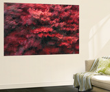 Red Splash Wall Mural by Art Wolfe